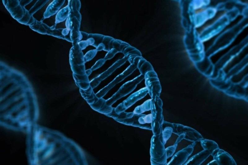 A diagram shows a close-up of DNA.