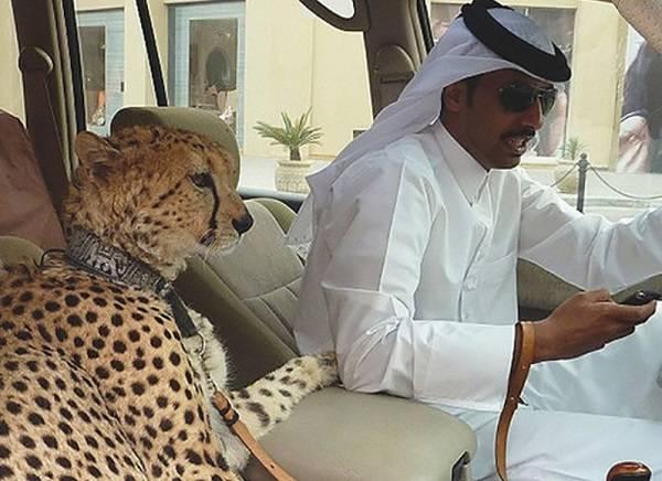 2 Dubai Extraño 1