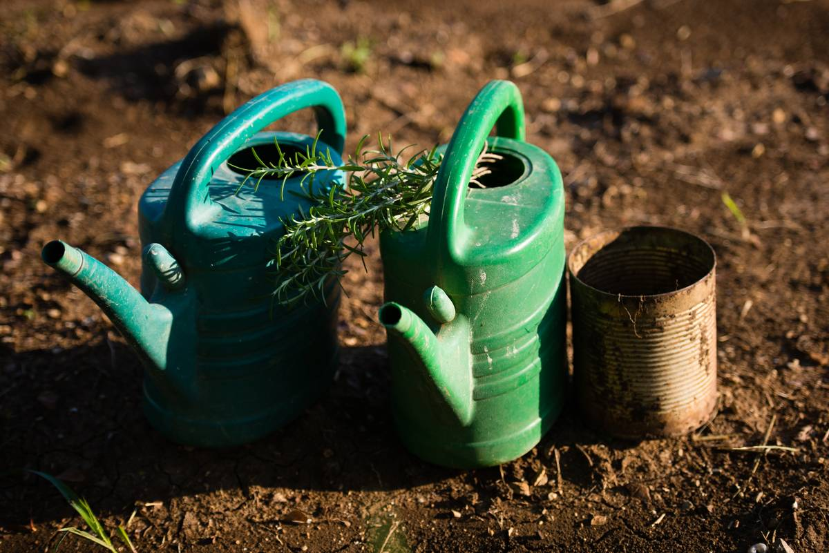 On August 13, 2015, watering cans and a bunch of rosemary are pictured.