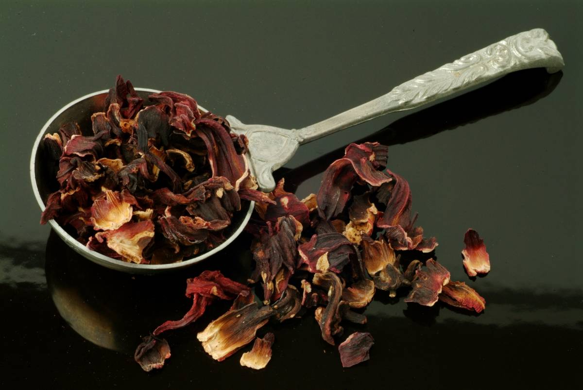 Medicinal Plant and Tea. Dried Blossoms Of Roselle. Hibiscus Sabdariffa.