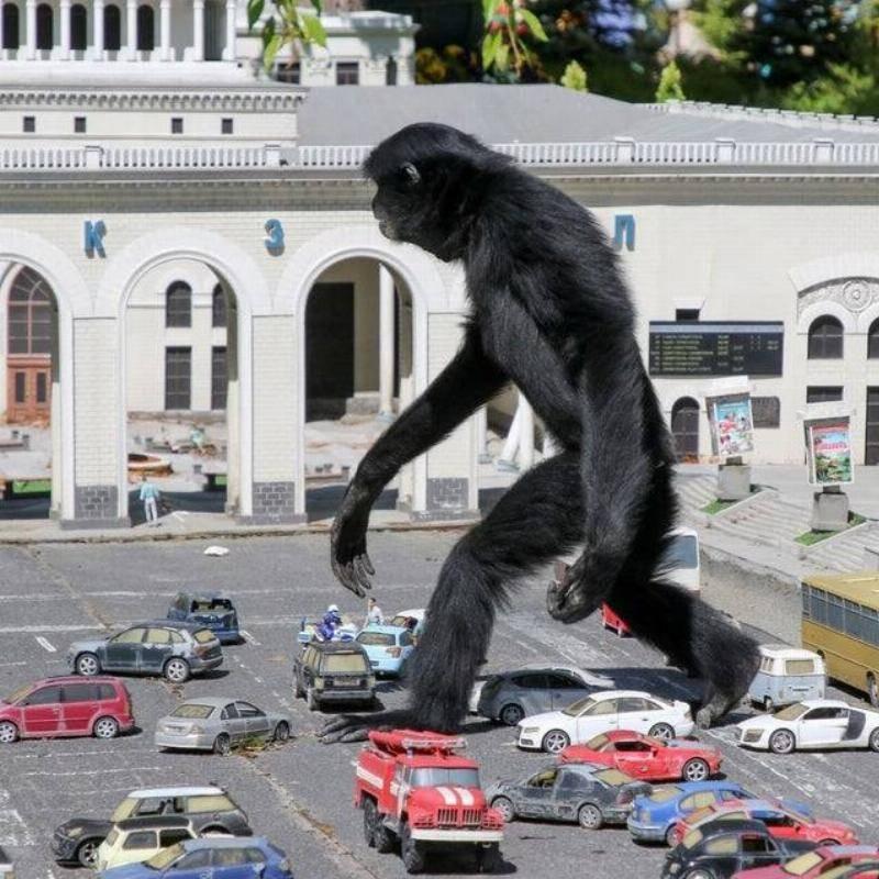 Gibbon-Monkey-Walks-Through-Model-Cars-18038