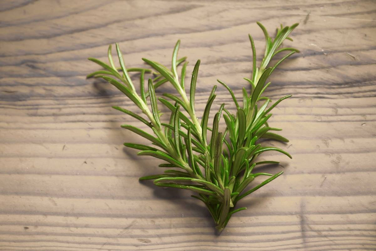 rosemary on a wooden table