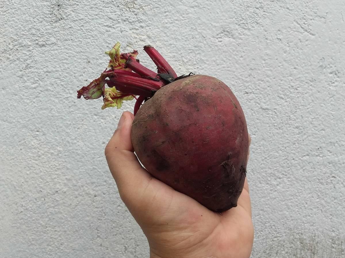 Corazón_de_remolacha
